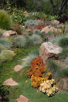 Low water landscape with a great mix of stone, succulents, grasses and perennial flowers