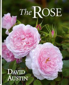 david austin roses american | David Austin's books - David Austin Roses