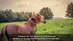 HJ Neuhauser a dit « Dès le moment où mon cheval veut me suivre pour aller là où je vais, je peux commencer son éducation, pas une seconde avant ».