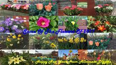 FLOWERS OF 2017 In this episode you will see some of the flowers I've manged to grow on my allotments in 2017 And i wanted to wish you all a Happy New Year for 2018