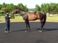 EMPIRE MAKER 25 May 2015 at JBBA Stallion Station in Japan. Empire Maker (USA) 2000 (Unbridled-Toussard), Starts: 8 Wins: 4-4-0 Earnings: $1,985,800, sire of Pioneer of the Nile & grandsire of American Pharoah. Winner of the 2003 G1 Belmont Stakes; G1 Wood Memorial Stakes & G1 Florida Derby.