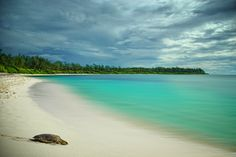 The World's Most Dreamy Beaches in 50 Pictures Imbricated Turtle in Desroches Island Sunny Beach, Beach Fun, Sea And Ocean, Ocean Beach, Les Seychelles, Coronado Beach, Lets Run Away, Crystal Clear Water, Africa Travel