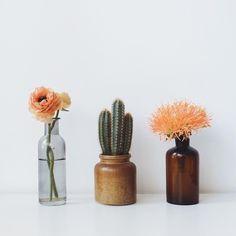 Cactus and flowers, always a good idea