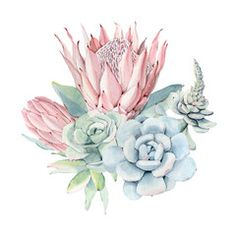 Find Watercolor Vintage Succulents Bouquet Spring Summer stock images in HD and millions of other royalty-free stock photos, illustrations and vectors in the Shutterstock collection. Thousands of new, high-quality pictures added every day. Protea Art, Illustration Blume, Garden Illustration, Watercolor Images, Floral Watercolor, Watercolor Succulents, Succulent Bouquet, Spring Pictures, Cactus Art