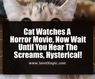 Cat Watches A Horror Movie, Now Wait Until You Hear The Screams, Hysterical!