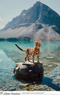 Bow lake and cat