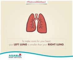 #DidYouKnow – Your left lung is smaller than your right lung. #TheIncredibleHeart #AsianHeartInstitute