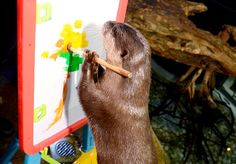 Otter artistes concentrate on their paintings - December 13, 2013 - More at today's Daily Otter post: http://dailyotter.org/2013/12/13/otter-artistes-concentrate-on-their-paintings/ !