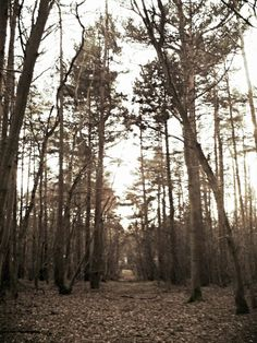 A pathway we found ..