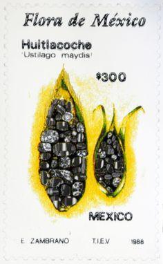 Ustilago MAC, 2014 Huitlacoche, Ustilago maydis, 1988 Intervención: Emilia Sandoval Museo de Filatelia