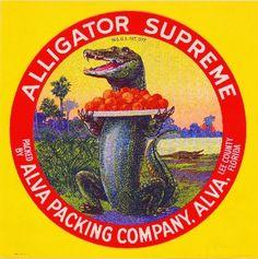 Alva Lee County Florida Alligator Supreme Orange Citrus Fruit Crate Label