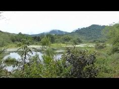 ▶ Reclaiming the Atlantic Rainforest of Brazil - YouTube