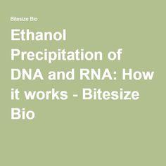 Ethanol Precipitation of DNA and RNA: How it works - Bitesize Bio