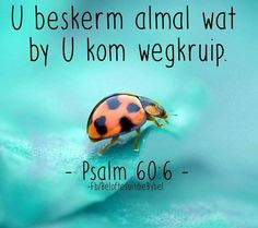 Psalm 60, Motivational Quotes, Inspirational Quotes, My Rock, Afrikaans, Prayers, Bible, Savior, Words
