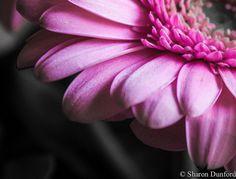 Just pink!, via Flickr.