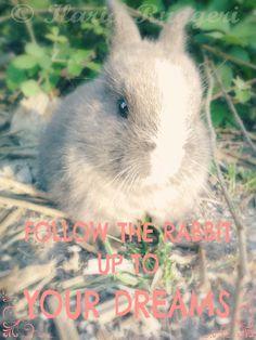 Follow the rabbit up to your dreams - © Ilaria Ruggeri personal Musa #magic #rabbit #dream #fluffiness