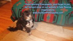 Did you know when listing on our website you helping a #rescue #pets  http://www.Auction4PetSupplies.com