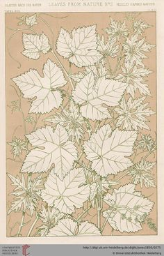 Tafel XCII. Flowers (1 of 10). Owen Jones, The Grammar of Ornament. Thanks to the University of Heidelberg digital library.
