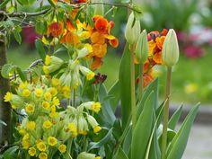 Das Schöne am Frühling ist,  dass er immer gerade dann kommt,  wenn man ihn am dringendsten braucht.  (Jean Paul)