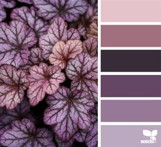 Do you ever get stuck in a color rut? I know most of my sweaters fall in one of three color palettes. If you ever need some color inspiration, this is one of my favorite resources. Sometimes I'll just scroll to stare at the pretty pictures! Color Schemes Colour Palettes, Bedroom Color Schemes, Colour Pallette, Color Combos, Bedroom Colors, Lavender Color Scheme, Purple Color Schemes, Design Seeds, Wall Colors