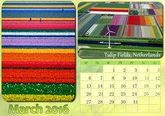 Tulip fields in the Netherlands are the perfect spring destination. Get your free trial http://photo-calendar-software.com/download.php and craft your own creative calendar designs! #WallCalendar #Calendar2016