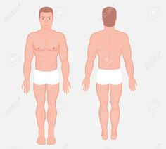 Posterior, frontal, anterior, back views of naked body of a European man in full growth in shorts. Vector illustration for advertising, medical (health care), bodybuilding. , #ad, #European, #body, #full, #man, #naked Hepatitis C, Bodybuilding, Medical Health Care, European Men, Logo Design Trends, Human Anatomy, Male Body, Image Now, Free Stock Photos