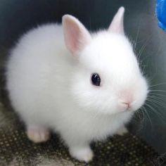 Little white bunny.