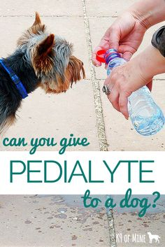 Can you give a dog Pedialyte? We'll explain.