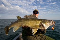 When youre talking about the best walleye lakes in Minnesota Mille Lacs Lake needs to be in the discussion. Despite all of the bad pub surrounding the lake over the past year walleye fishing is still VERY good  take it from us. One bonus: boat traffic should be down compared to past seasons with walleye being catch-and-release only this year. If you arent concerned with keeping fish Mille Lacs is still a great place to spend your opener.  Theres a big bumper crop of small walleyes coming up…