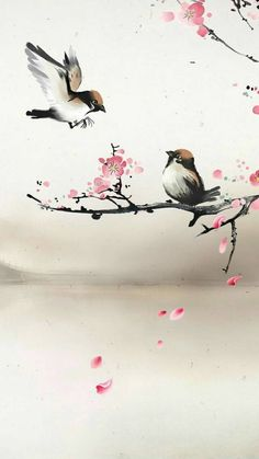 wallpaper now. Browse millions of popular wallpapers and ringtones on Zedge and personalize your phone to suit you. Browse our content now and free your phone Japanese Artwork, Japanese Painting, Chinese Painting, Watercolor Bird, Watercolor Paintings, Cherry Blossom Painting, Cherry Blossoms, Bird Wallpaper, Wallpaper Wallpapers