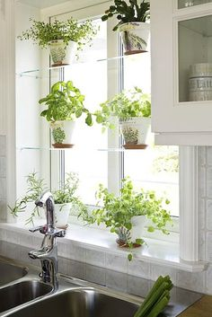 glass shelves, white pots or acrylic shelfs Glass Shelves At Home Depot Glass Shelves In Living Room Glass Window Shelves Homey Kitchen Window Shelf Ideas Best Shelves On Diy Glass Window Shelves – Outdoor Furniture 24 Indoor Gardening Ideas You Don't Kitchen Garden Window, Kitchen Window Shelves, Herb Garden In Kitchen, Kitchen Plants, Garden Windows, Kitchen Window Decor, Kitchen Windows, Kitchen With Plants, Kitchen Window Curtains