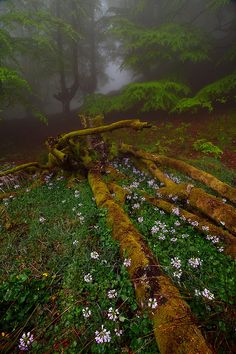 Gorbea Gardens <<< haunting and incredibly pretty at the same time...