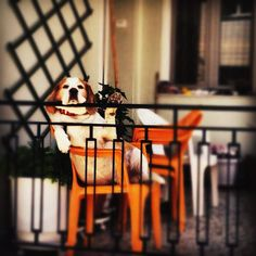 This is the life. Photo Art, Pets, Animals, Life, Furniture, Heart, Wall, Home Decor, Animales