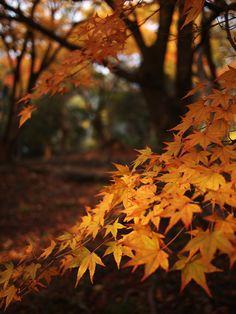 Autumn @ Inspiration Lane