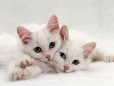 katzenbabys lustig | Katzenbabys im niedlichen Zwillings-Look
