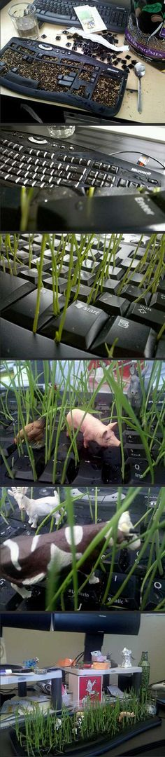 Funny. Guy turned his office-mate's keyboard into a garden as a prank. Look and see ---- I would never do this though. He probably used an old keyboard.  I hope so. lol