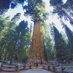 9. Sequoia National Park | places to visit in Northern California