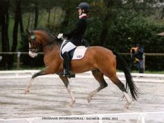 Dressage Pony Dot | RD Horses For Sale
