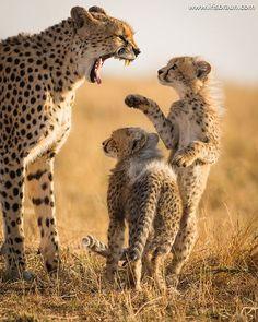 Shut up!  | Photo by © Iris Braun  Tag a friend  #Destination_wild