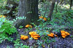 GMiller398GO Mushrooms 2010, via Flickr. -- 2010 Innsbrook Photo Contest, Innsbrook Resort, Missouri MO