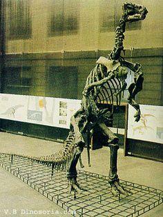 Iguanodon, Musée Senckenberg à Francfort