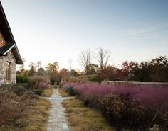 Landscape architect firm Nelson Byrd Woltz designed 22 acres in Virginia with native species in mind. One is Pink Muhly Grass, a feathery varietal that creates a pink wash across the horizon when it's in bloom. Nelson Byrd Woltz Blue Ridge Mountains, Virginia Garden | Gardenista