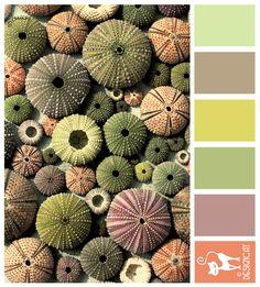 Anenomies - peach, green, mustard yellow, grey, lilac  - Designcat Colour Inspiration Pallet