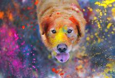#PetPhotography: quando diventa #arte e spopola nel web