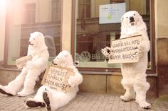 I Love Arctic! Icebjoerns protesting in Stockholm. #ilovearctic #savethearctic #save the arctic #sthlm #sweden #climatechange #polarbears #animals
