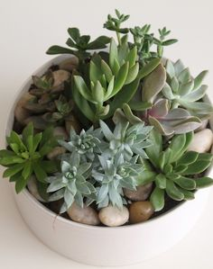 Succulent Garden in White Ceramic-A mixture of succulents in a simple, chic white ceramic pot. Easy care plants. Exact succulents will vary. #CentralSquareFlorist #IndoorPlants #Succulents