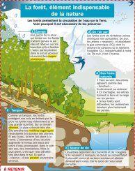 La forêt, élément indispensable de la nature - Mon Quotidien, le seul site d'information quotidienne pour les 10-14 ans !