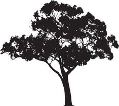 Eucalyptus tree silhouette, Vector vector art illustration