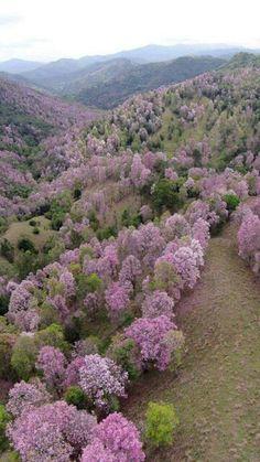 """La Robleda"" or Oak Grove in the mountains of Cayey, Puerto Rico."