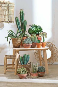 The ultimate ideas for decorating interiors with cactus art garden indoor plants Indoor Cactus Plants, Cactus House Plants, House Plants Decor, Cool Plants, Plant Decor, Decoration Cactus, Decoration Plante, Plantas Indoor, Succulent Plants